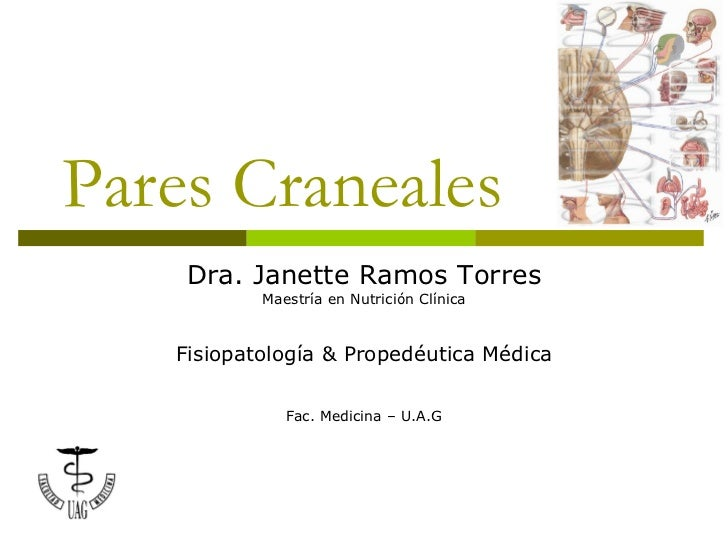 Pares Craneales Dra. Janette Ramos Torres Maestría en Nutrición Clínica Fisiopatología & Propedéutica Médica Fac. Medicina...
