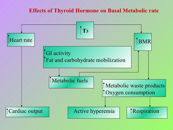 endocrine system effects of hormones on metabolic rate chart Thyroid as the endocrine gland for control of animal production and adaptation  for cold environmental conditions  thyroid hormones also impact lipid  metabolism but especially lipolysis  in correspondence with variations in  metabolic rate with season, several data are available (perera et  table of  contents data sheet.