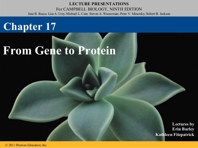 17 - From Gene to Protein