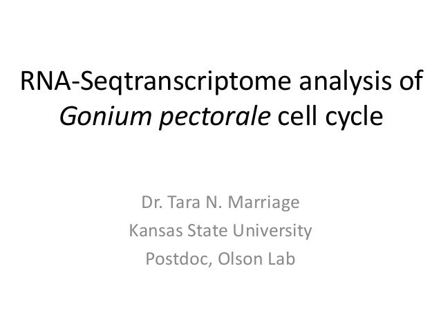 RNA-Seq transcriptome analysis of Gonium pectorale cell cycle.