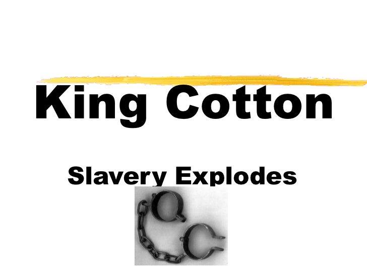 King Cotton Slavery Explodes