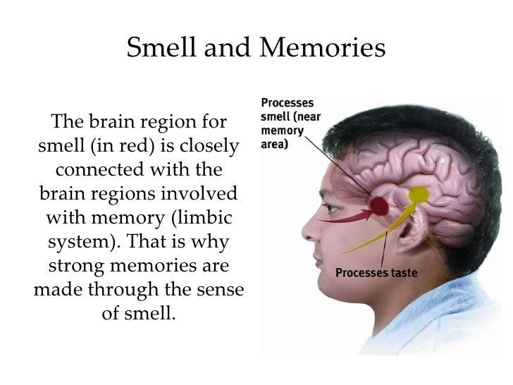 Kinesthesis psychology