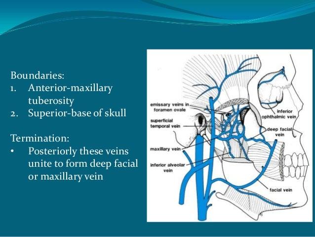Pressure points anatomy