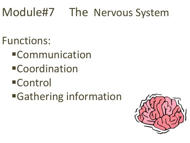 Module#7     The Nervous SystemFunctions:  Communication  Coordination  Control  Gathering information