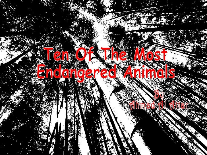 Ten Of The Most Endangered Animals By Ahmad Al Attar