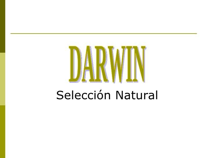 <ul><li>Selección Natural </li></ul>DARWIN