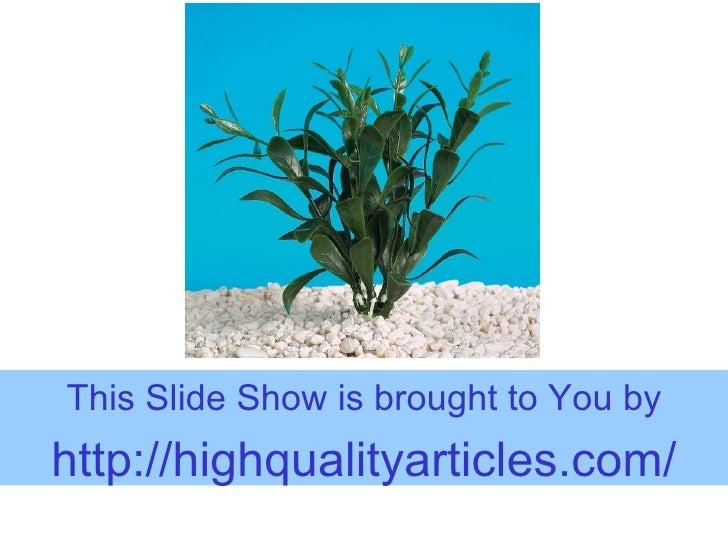 Life-Like Living With Aquarium Plants