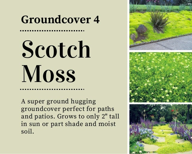 18 beautiful unique groundcover plants for the landscape for Best low growing groundcover for full sun