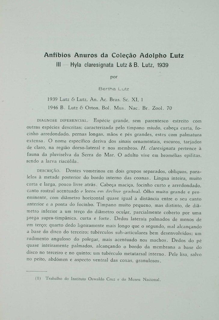 Anfíbios anuros da coleção Adolpho Lutz. III