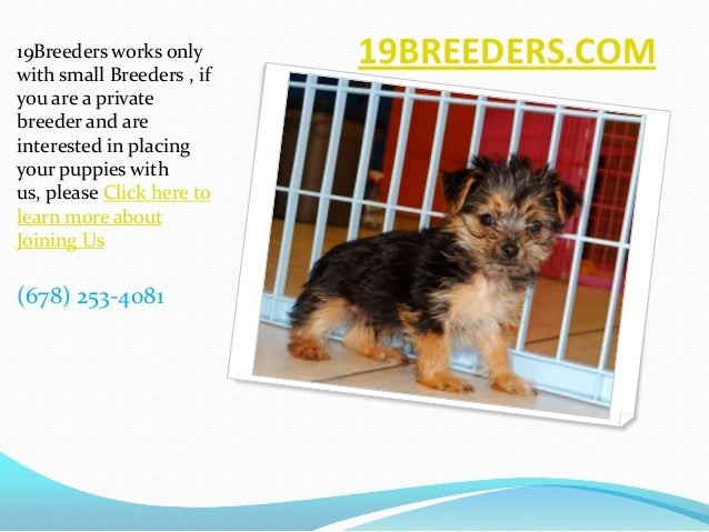 19BREEDERS.COM19Breeders works onlywith small Breeders , ifyou are a privatebreeder and areinterested in placingyour puppi...
