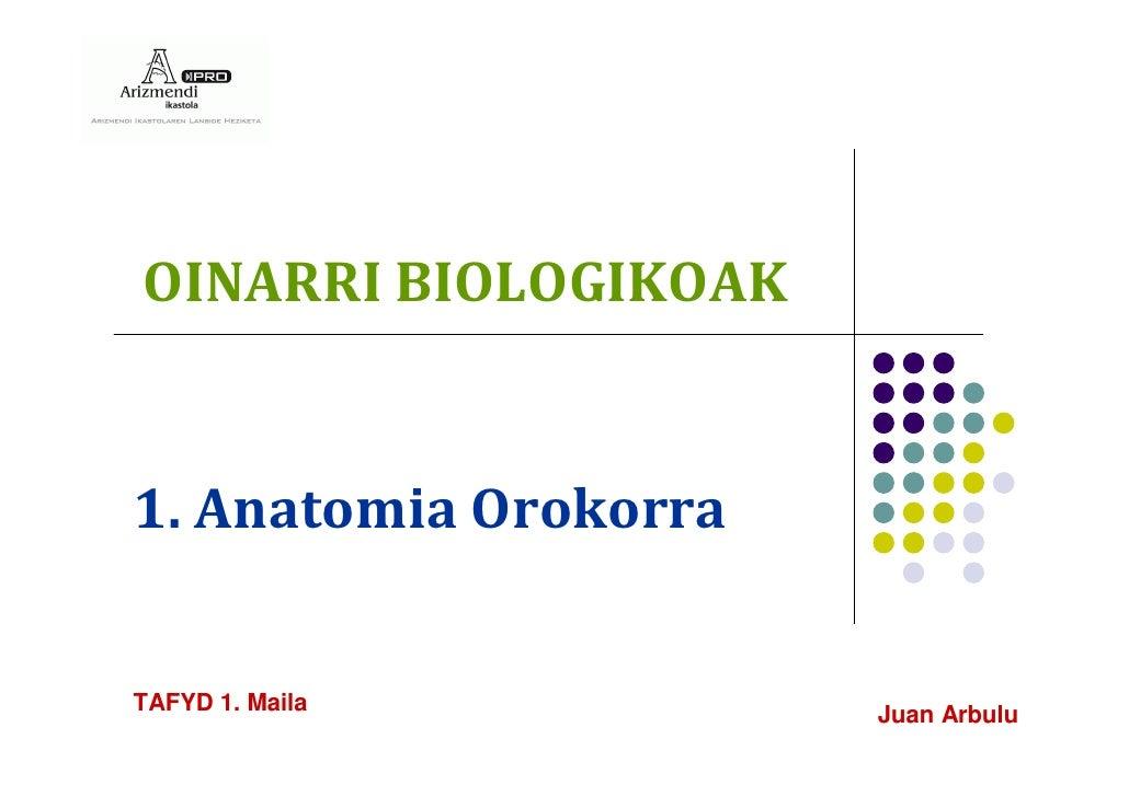 OINARRI BIOLOGIKOAK1. Anatomia OrokorraTAFYD 1. Maila                       Juan Arbulu