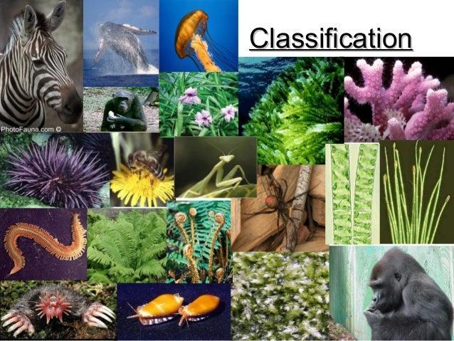 ClassificationClassification