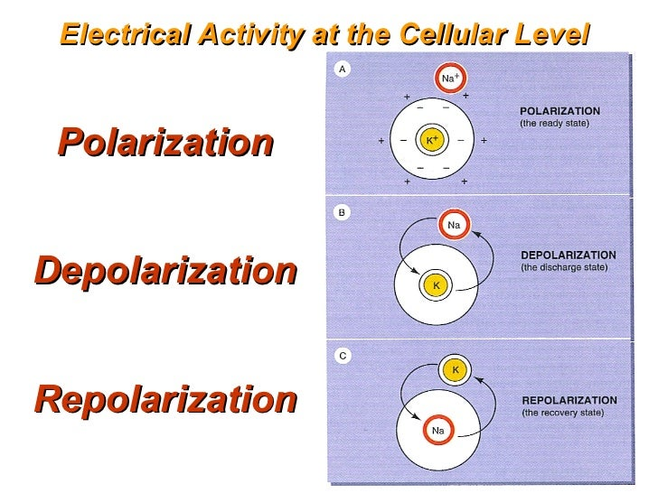 polarization 2 essay
