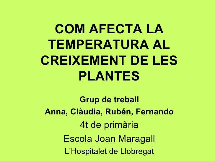 COM AFECTA LA TEMPERATURA AL CREIXEMENT DE LES PLANTES Grup de treball Anna, Clàudia, Rubén, Fernando 4t de primària Escol...