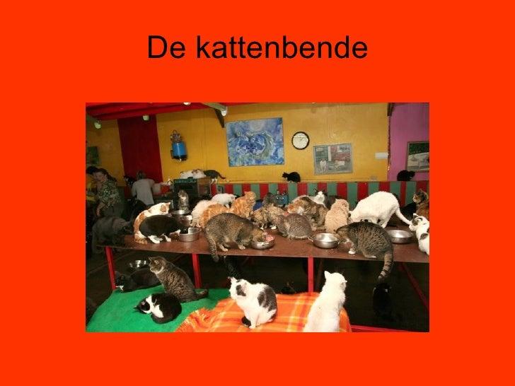 1g De Kattenbende