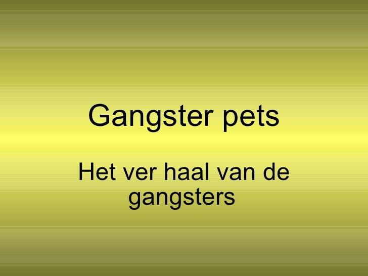 1g Gangster Pets