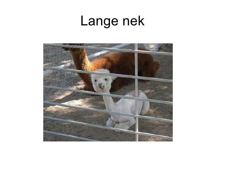 1m  Lange Nek