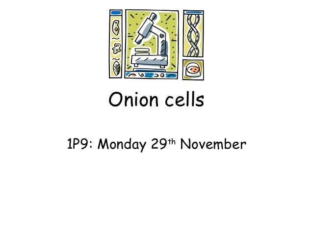 Onion cells 1P9: Monday 29th November