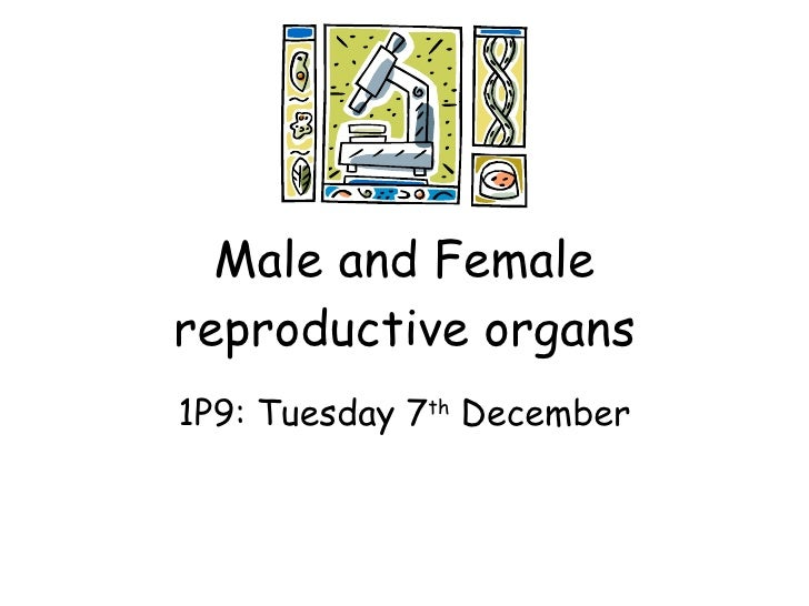 Male and Female reproductive organs 1P9: Tuesday 7 th  December