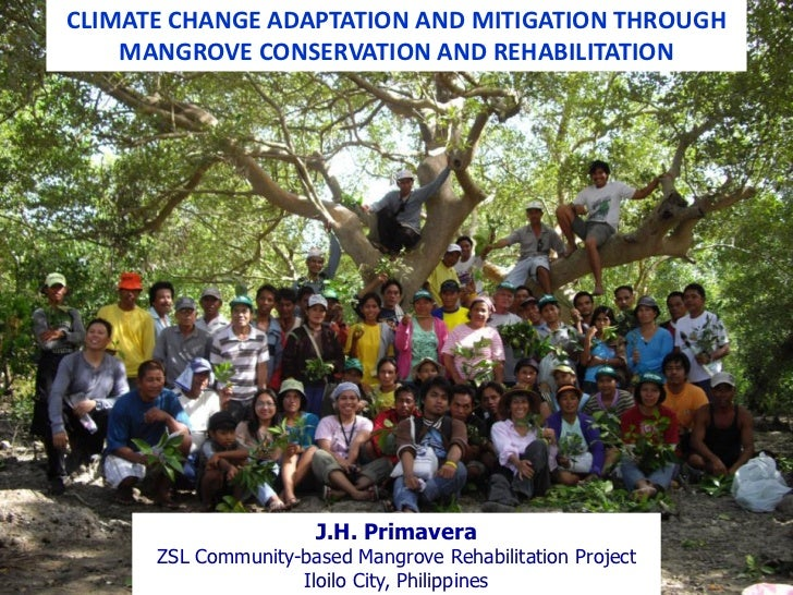 CLIMATE CHANGE ADAPTATION AND MITIGATION THROUGH    MANGROVE CONSERVATION AND REHABILITATION                      J.H. Pri...
