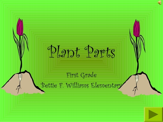 Plant Parts First Grade Bettie F. Williams Elementary