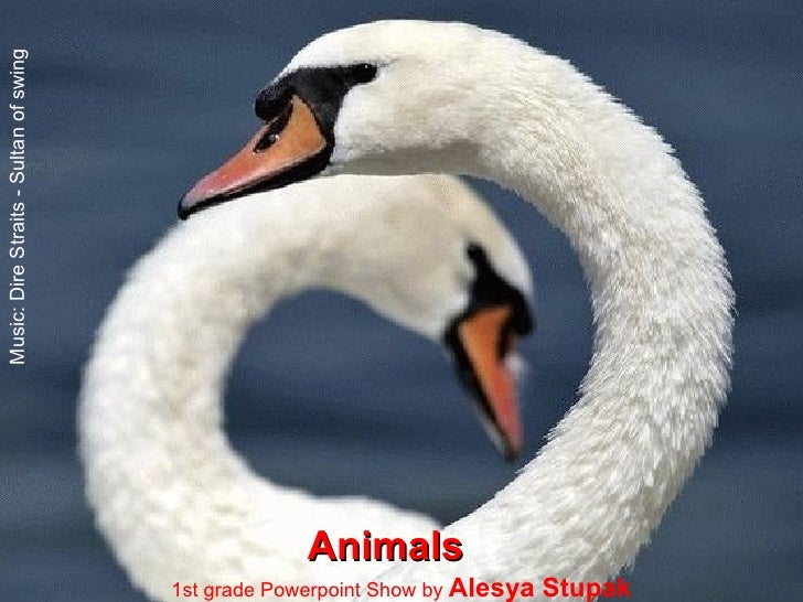 Animals 1st grade Powerpoint Show by  Alesya Stupak Music: Dire Straits - Sultan of swing