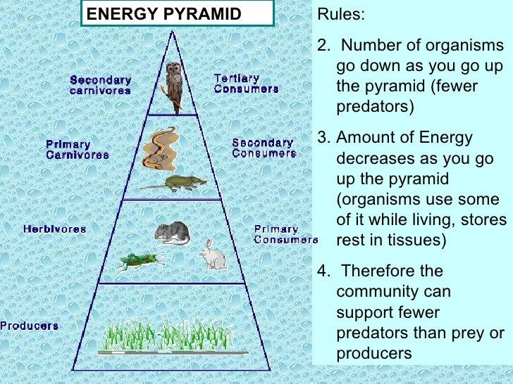 ocean food pyramid - 728×546
