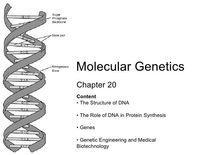 Chapter 20 Molecular Genetics Content  • The Structure of DNA  • The Role of DNA in Protein Synthesis  • Genes  • Genetic ...