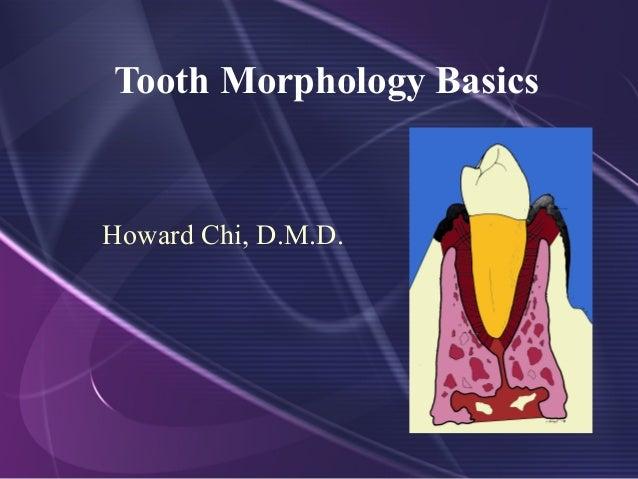 Tooth Morphology Basics Howard Chi, D.M.D.