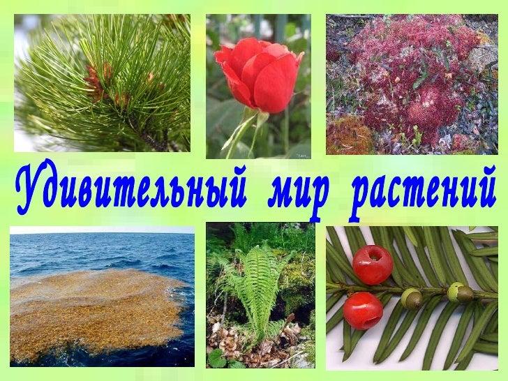 Разнообразие растений.  Презентация.  Много красочных иллюстраций. знакомит детей с классификацией животных.