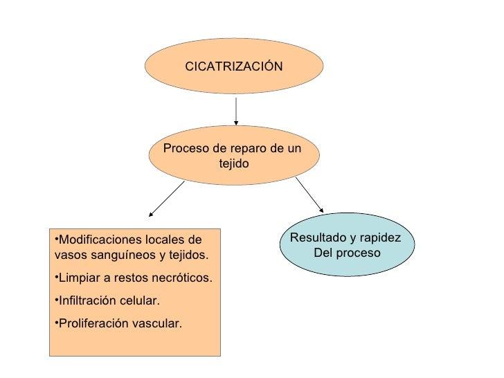 CICATRIZACIÓN Proceso de reparo de un  tejido Resultado y rapidez  Del proceso <ul><li>Modificaciones locales de vasos san...