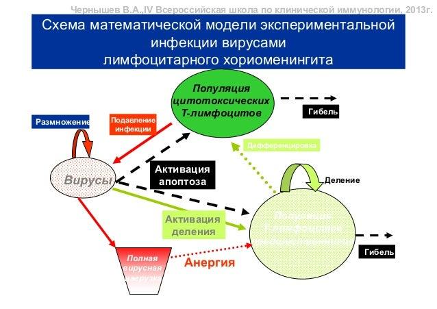 Схема математической модели