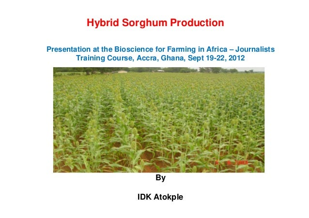 Hybrid Sorghum Production Presentation at the Bioscience for Farming in Africa – Journalists Training Course, Accra, Ghana...