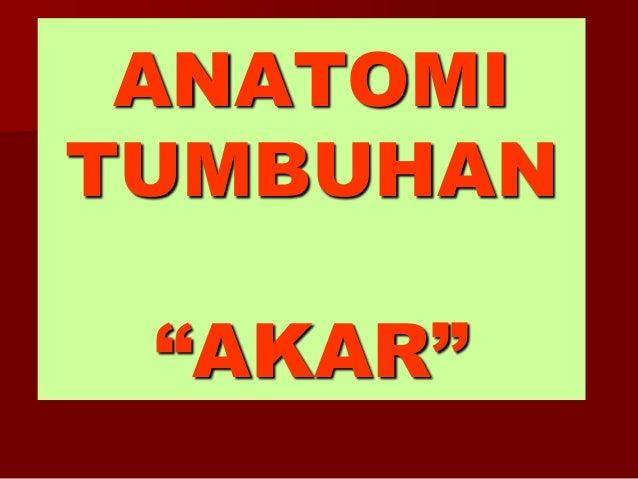 "ANATOMI TUMBUHAN ""AKAR"""