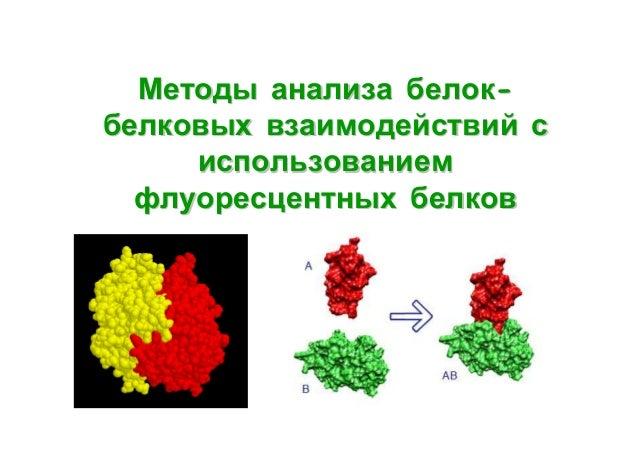 Методы анализа белокбелковых взаимодействий с использованием флуоресцентных белков