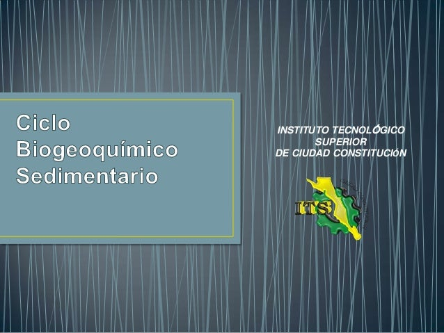 2.3.1 Ciclos biogeoquímicos sedimentarios