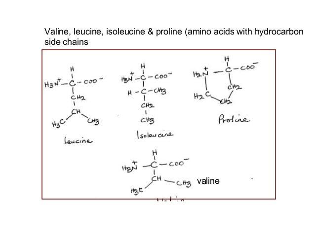 Valine Leucine And Isoleucine Metabolism Valine Leucine Isoleucine