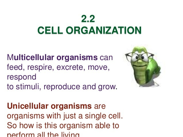 Unicellular Organisms Example Unicellular Organisms Are