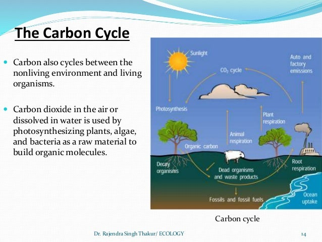 Carbon Cycle Order Related Keywords - Carbon Cycle Order ...