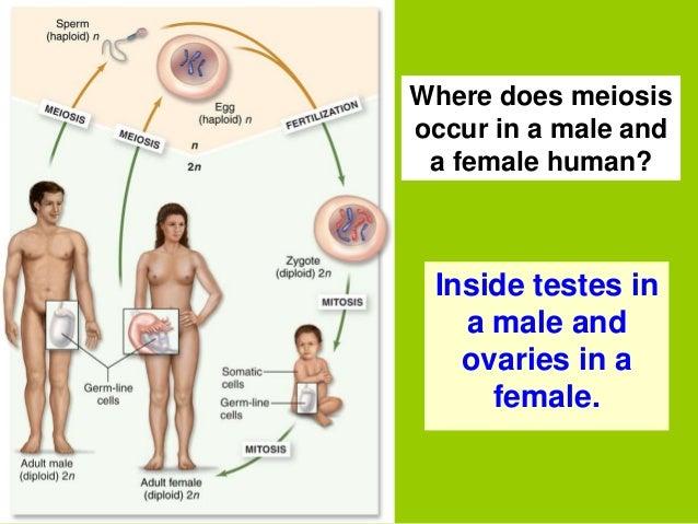 second male advantage sperm competition humans