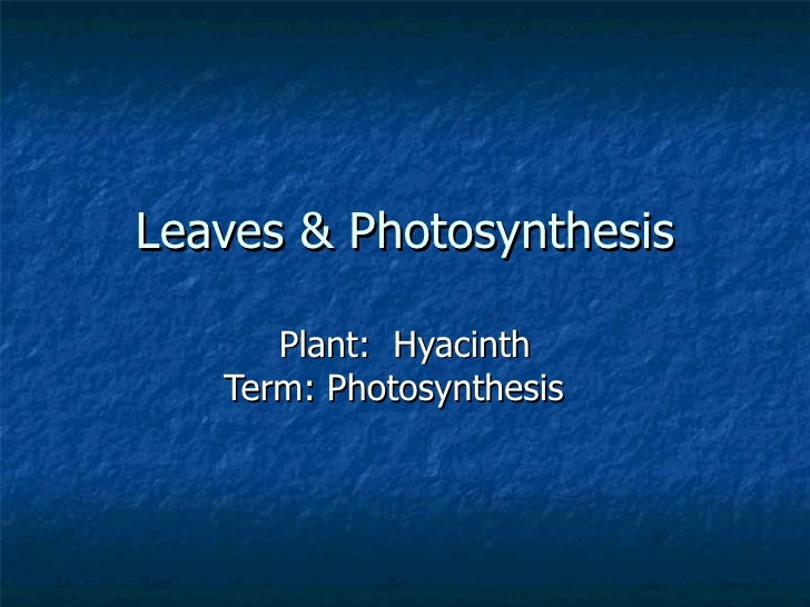 Leaves & Photosynthesis Plant:  Hyacinth Term: Photosynthesis