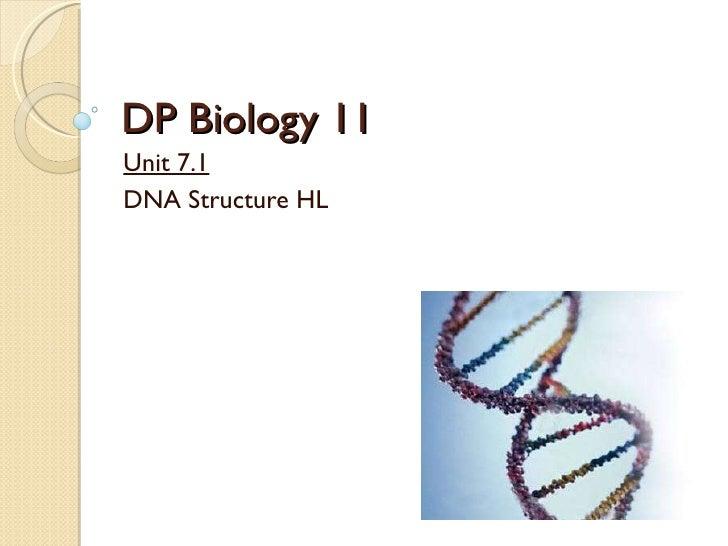 2   7.1 - dna structure hl