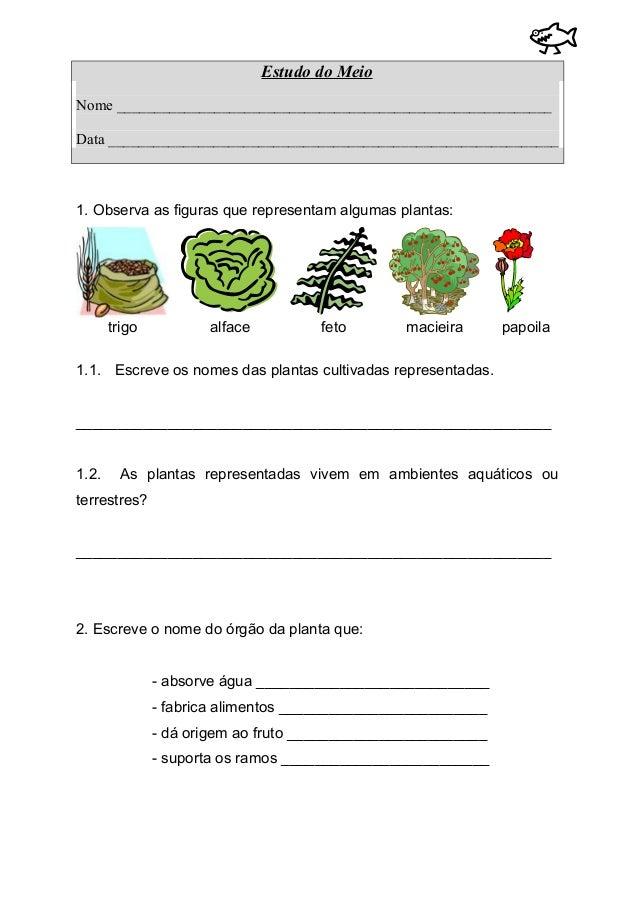 Os seres vivos (plantas e animais)