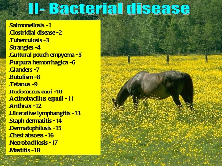 bacterial affections Equine