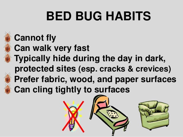 Do Bed Bugs Bite During The Day 28 Images What Bed