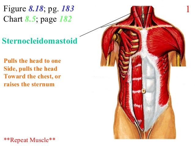 Figure 8.18; pg. 183 Chart 8.5; page 182 Pulls the head to one Side, pulls the head Toward the chest, or raises the sternu...