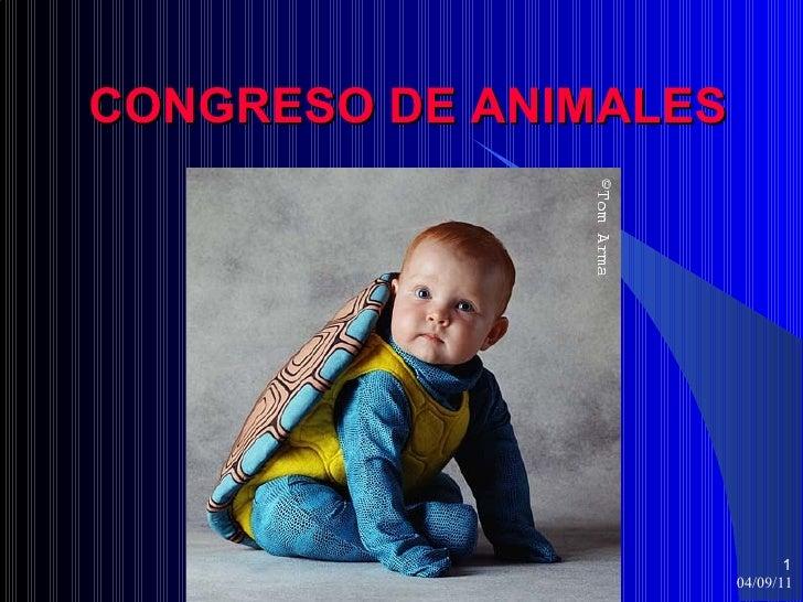 CONGRESO DE ANIMALES                              1                       04/09/11