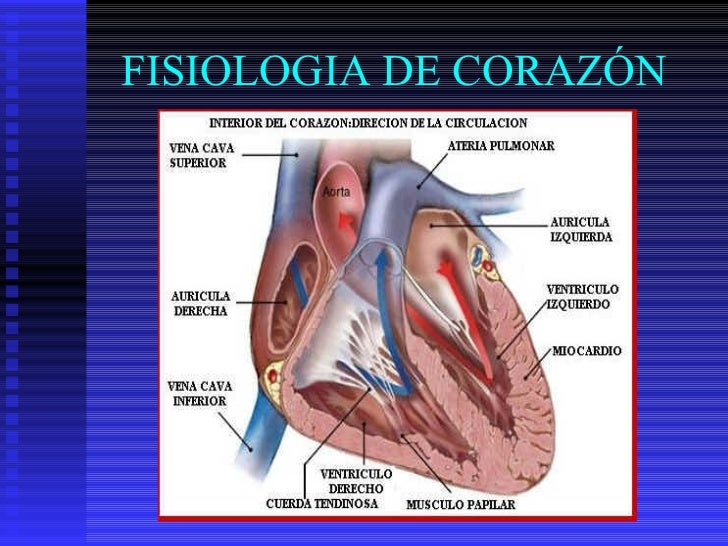 FISIOLOGIA DE CORAZÓN