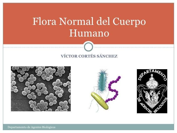 2.  flora normal del cuerpo humano