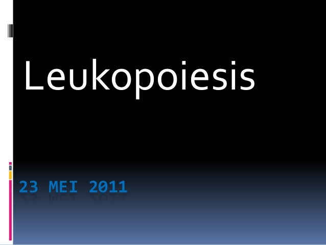 23 MEI 2011Leukopoiesis